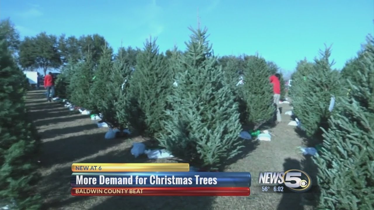 why a christmas tree may cost you more this year - Cost Of Christmas Tree