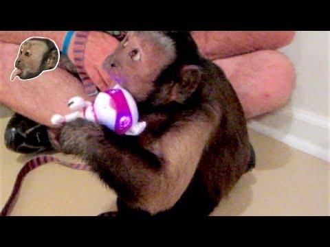Capuchin Monkey & Robot Puppy!