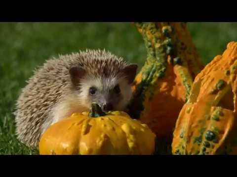 Hedgehog Has a Gourd Time