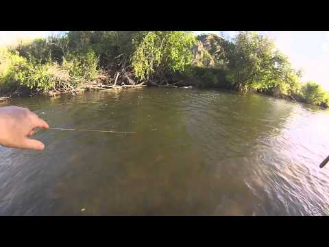 Tenkara fly fishing on the weber river youtube for Weber river fishing report