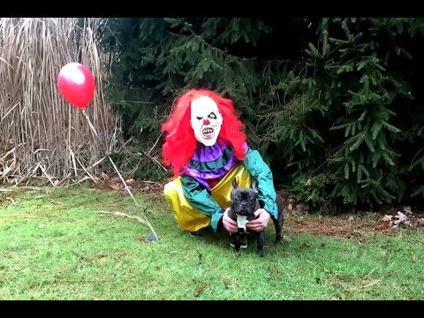 Funny Dog VS Killer Clown IT Prank: Flor The Frenchie