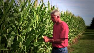 Corn: It