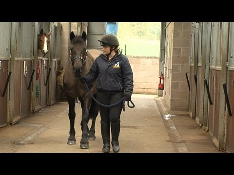 Rehomed rescue horse Charlie helps teach students