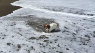 徳島県 日和佐 大浜海岸 うみがめが上陸して、産卵する浜。 5才にして...