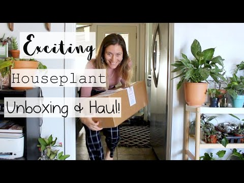 EXCITING Rare Houseplant Unboxing & Haul! | Steve's Leaves Haul & Review!