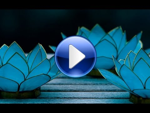 event planning  design blue lotus insights reel, Natural flower