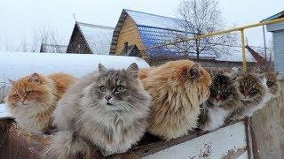 Коты, кошки -разные неповторимые...