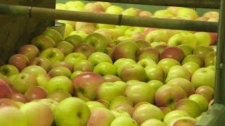 Apple Season in Hendersonville   NC Weekend   UNC-TV