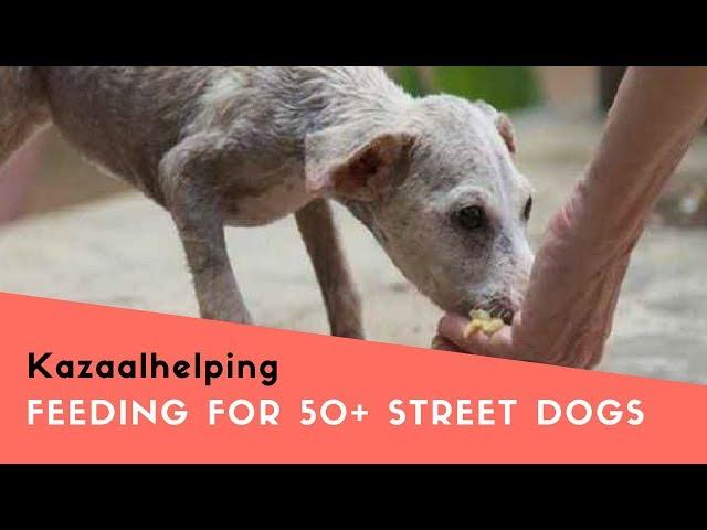 Feeding For 50+ Street Dogs In Delhi | NGO For Street Dogs