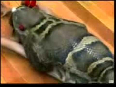 кабр азоби узбекча видео