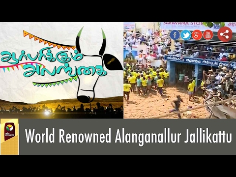 Highlights of World Renowned Alanganallur Jallikattu Battleground in Tamil Nadu