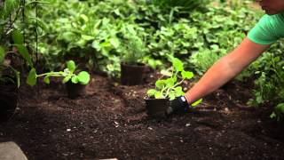 Episode 5:  Creating A Kitchen Garden