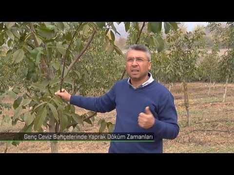 İbrahim Balkal | Ceviz Yaprak Dökümü Sonbahar |