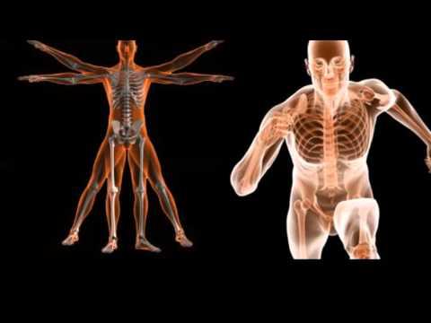 Introducción a la anatomía humana 01 - YouTube