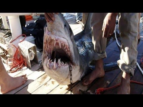 Alerte : les requins attaquent !