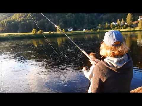 Mrs Lenschow - salmon 17 lb 3 oz (7,8 kg) Mandalselva Norway July 2016
