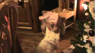Westie Vs Gift Bag