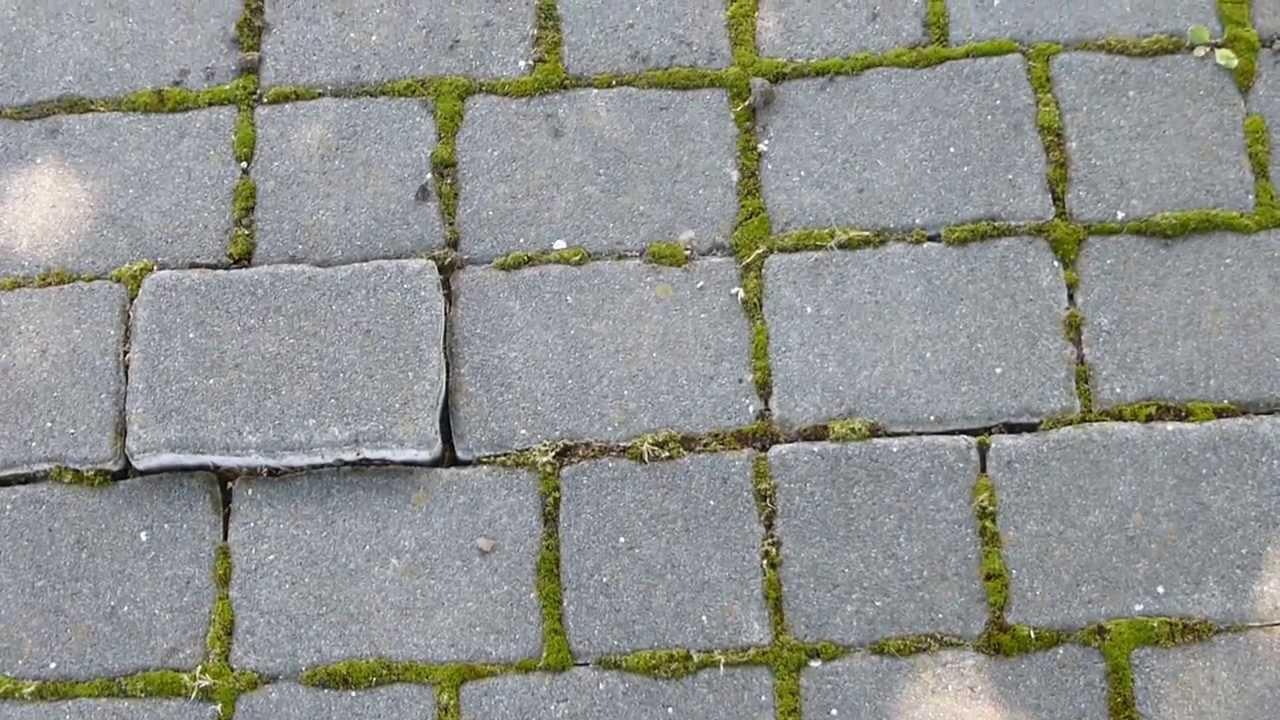 12000 adoquines del piso con musgo raw calles y for Adoquines de piedra precios