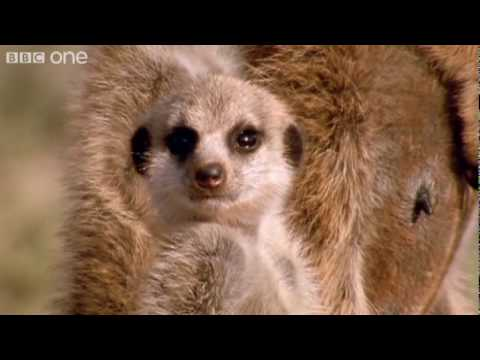 Funny Talking Animals - Walk On The Wild Side - Episode Two Preview - BBC One