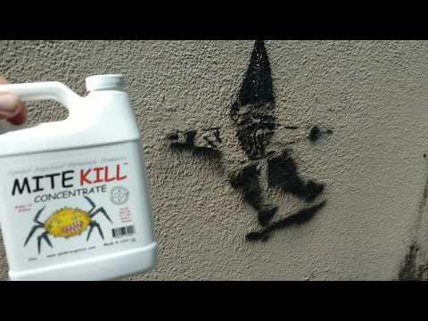 Spider Organics MITE KILL CONCENTRATE