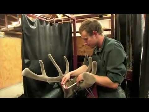 How is Deer Antler Velvet Processed?