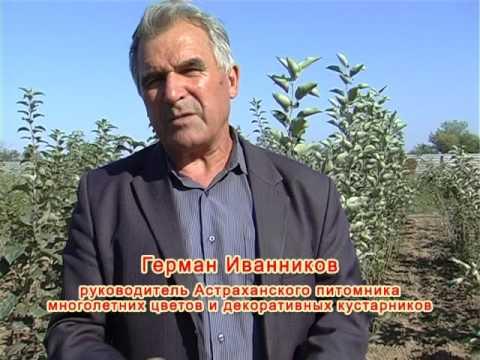 АНКОР-ТВ (осень-2013)