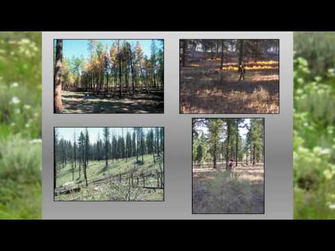 Post Fire Ecology-  Dr. Becky Kerns