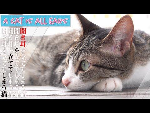 聞き耳を立ててしまう猫