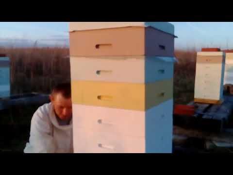 Результаты обработки пчел препаратом ТЭДА