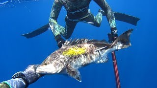 spearfishing adventures 20: Attica's gold