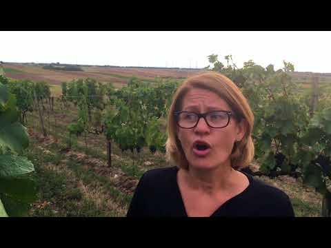 Blaufränkisch wine guide - Interview with Dorli Muhr