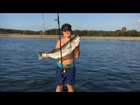 Watts Bar Dam Striper Fishing 2017 In Tennessee! GoPro
