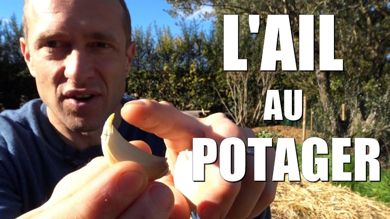 Download L'ail au potager
