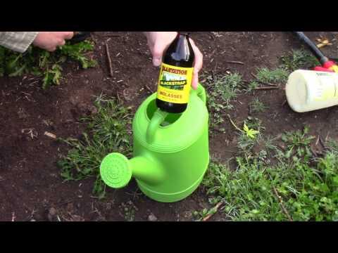 Molasses Feeding Cannabis