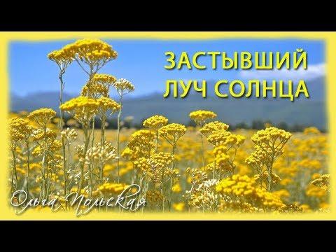 Бессмертник - трава для здоровья и красоты