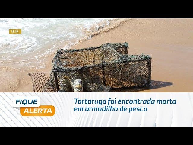 Tartaruga foi encontrada morta em armadilha de pesca na praia de Jacarecica