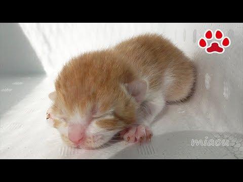 捨て猫まや 隔離小屋生活 A discard cat, Maya  Isolation hut life
