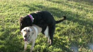Download Video The Hill People Doggie Style.avi MP3 3GP MP4
