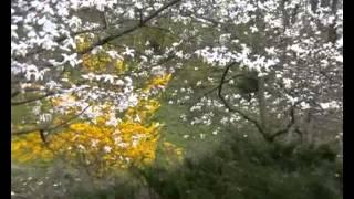 Ботанический сад Киев 14.04.2007