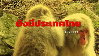 เพลงยังมีประเทศไทย..      (คาราบาว)