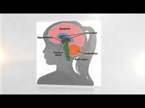 Brain Training Online Games