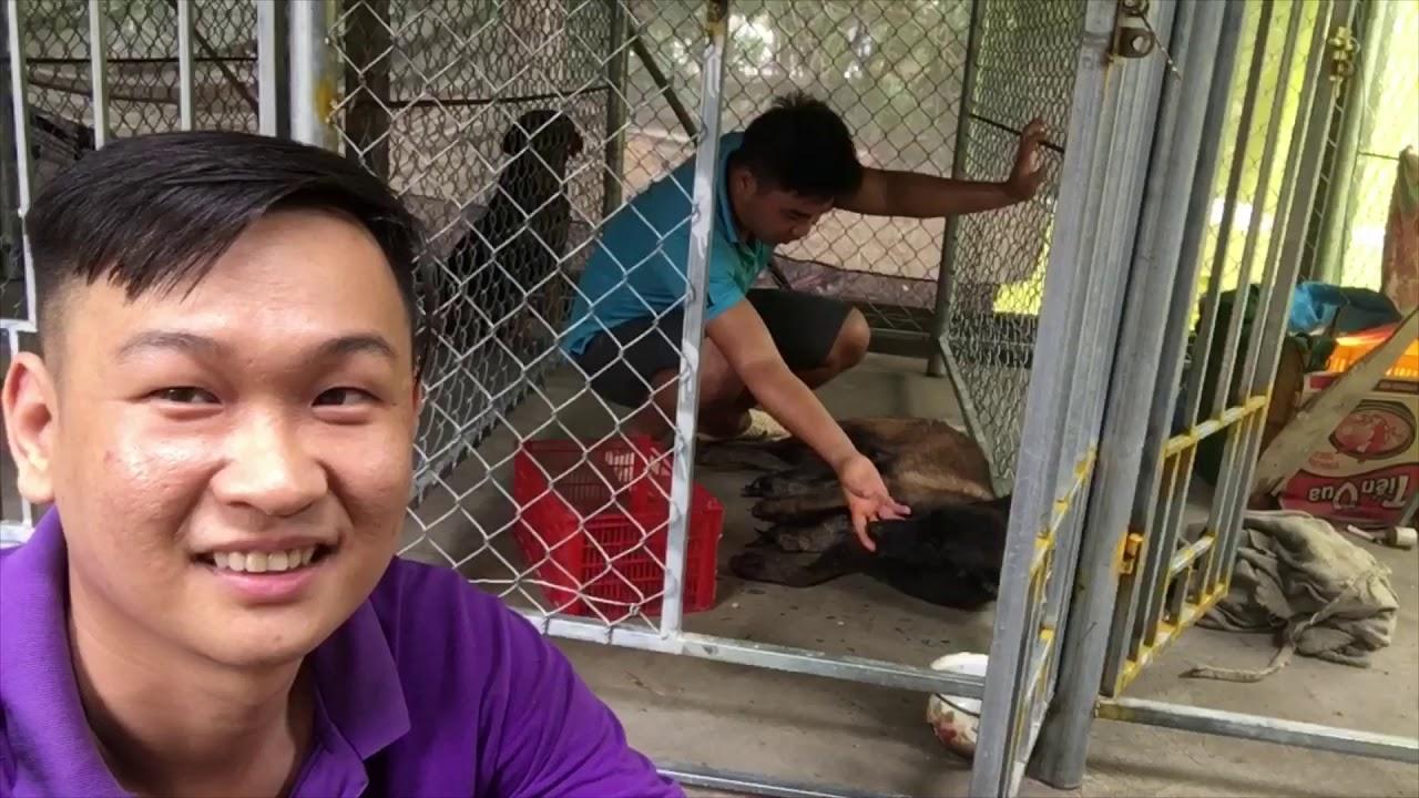 Khám phá Chó Malinois , Rottweiler nuôi trong chuồng heo , bò , dê ,  zalo 0766778880
