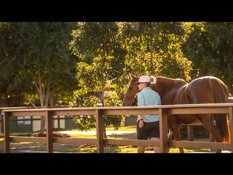 2018 Gold Coast National Broodmare Sale Day 1 (Live Stream Archive)