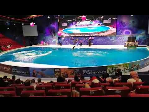 Dubai dolphinarium 2019😍