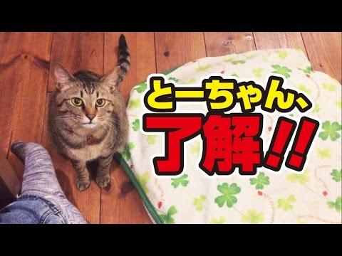 甘え下手な猫がかわいい特技を披露!〜Cat's special skill!〜