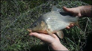 Рыбалка на озере. Наташкин став. Караси на бойлы 20 мм.