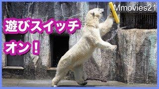 ホッキョクグマ モモの大ジャンプ! ホースの水に反応 Polar Bear Jump !