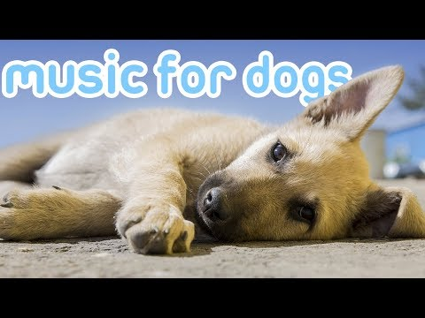 New & Improved Relaxing Music for Your Dog at Home! 2018!