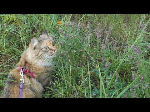 Вопрос: Как долго могут гулять коты?