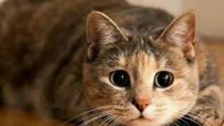 Почему нельзя смотреть кошкам в глаза!?